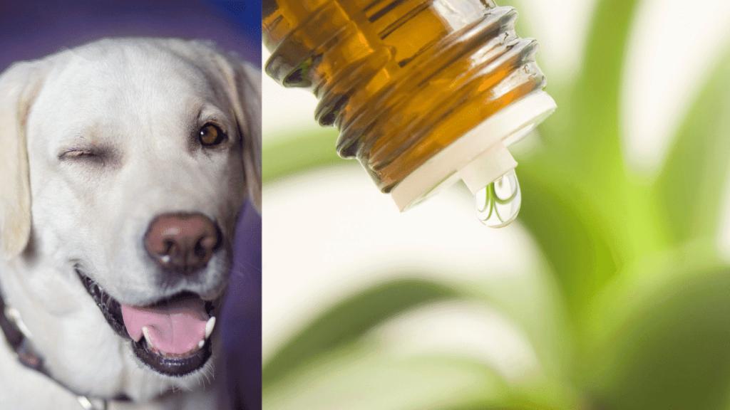 Hausmittel gegen Hundeflöhe
